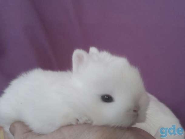 Питомник.карликовые кролики квартирного содержания, фотография 4