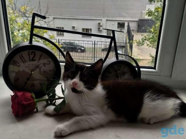 Ванюша  ещё котёнок, но знает, что классика в моде всегда, поэтому носит строгий деловой костюм в черно-белых тонах., фотография 2