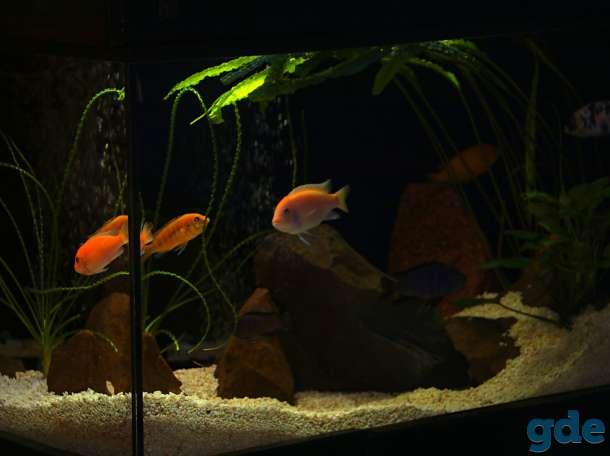 аквариум 200 литров, фотография 4