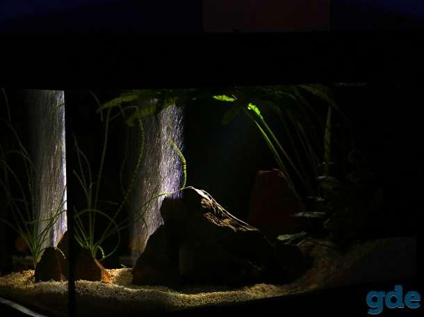 аквариум 200 литров, фотография 8