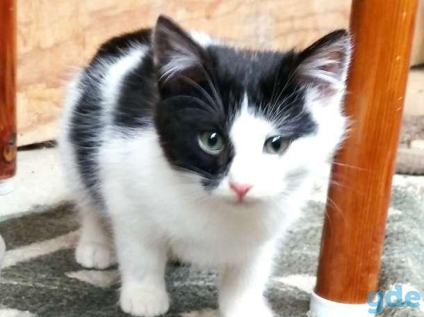 Котята Срочно, фотография 1