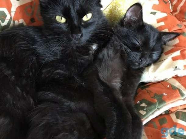 Две Ночки- мама и дочка, ищут дом. Нежные, ласковые кошечки, с которыми обязательно надо знакомиться лично, фотография 2