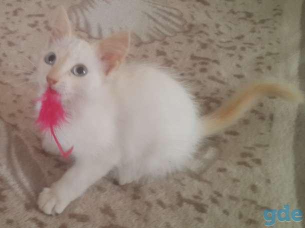 Котята в дар, фотография 4