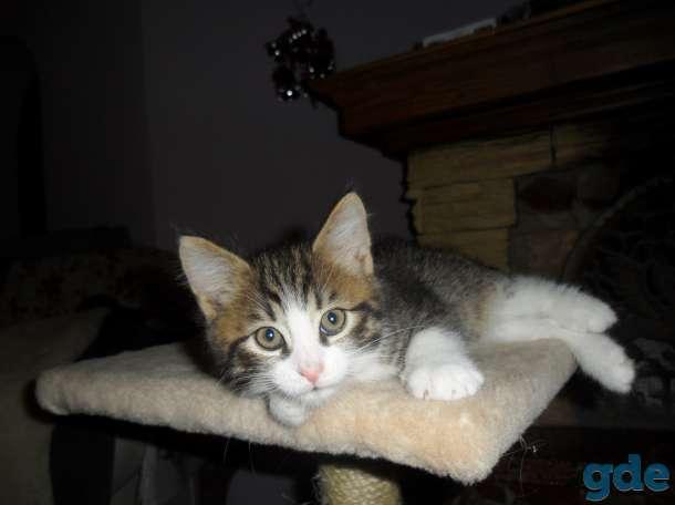 Котята в добрые руки, фотография 7