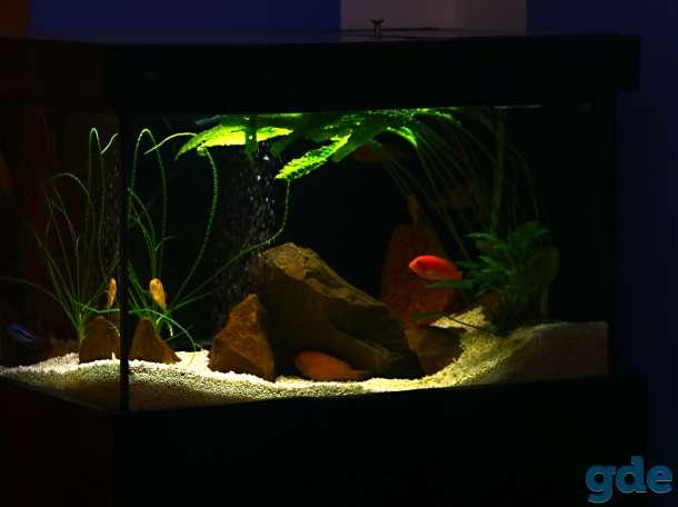 аквариум 200 литров, фотография 11
