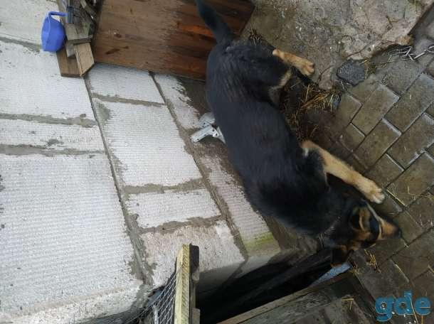 Нашлась собака, фотография 4