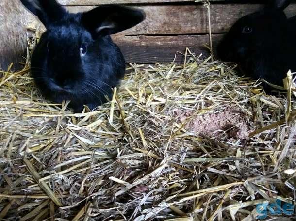 кролико, фотография 3