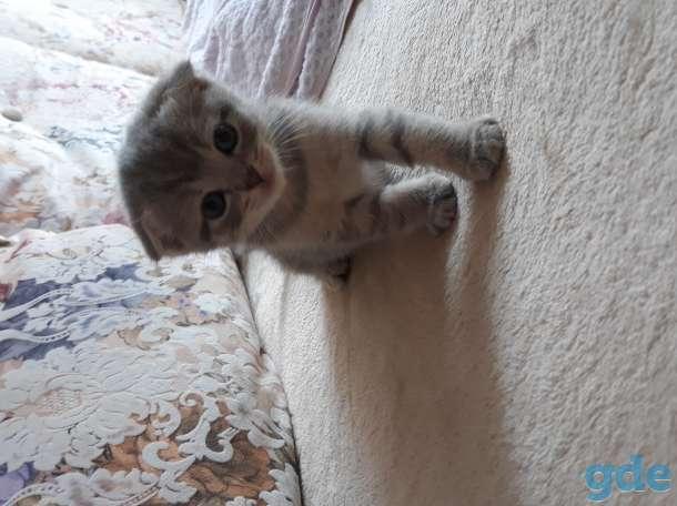 Продам котят, фотография 3