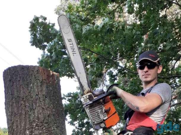 Удаление аварийных деревьев, фотография 1