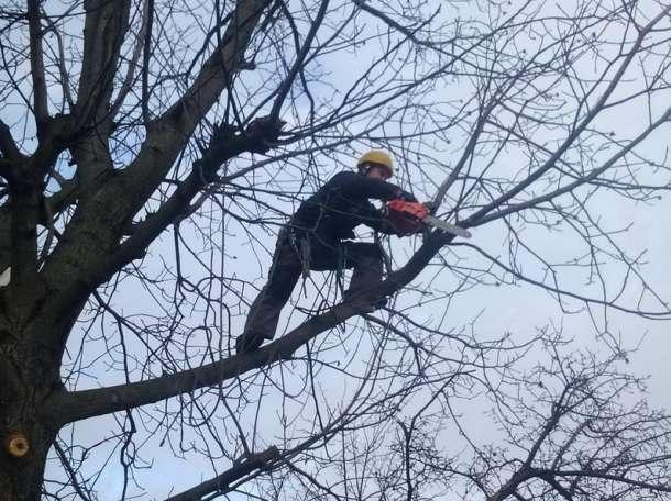 Удалить, спилить дерево, фотография 2