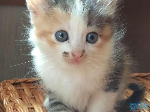 Котятам нужен дом., фотография 2