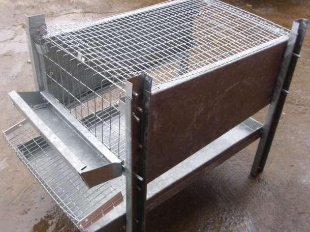 Клетки для перепелов и кур несушек, фотография 4