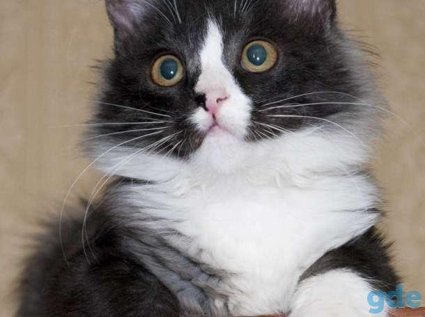 Кошечка Мята, фотография 2