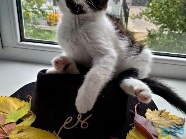 Ванюша  ещё котёнок, но знает, что классика в моде всегда, поэтому носит строгий деловой костюм в черно-белых тонах., фотография 1