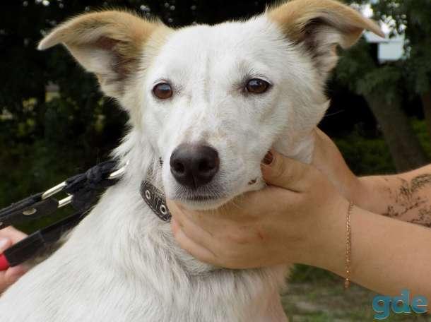 Собака Лаки в добрые руки, фотография 4