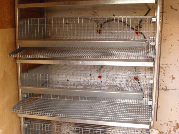 Клетки для перепелов и кур несушек, фотография 3