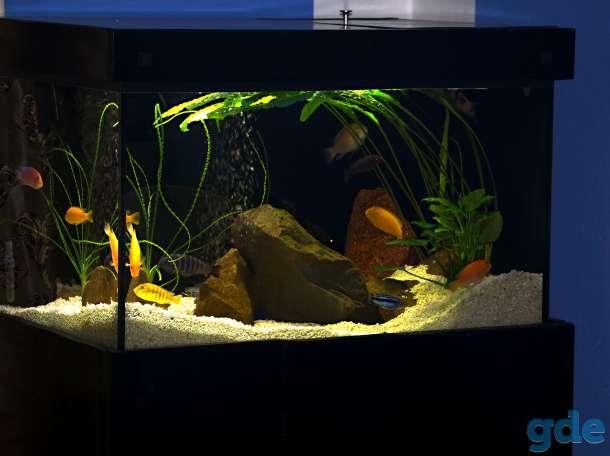 аквариум 200 литров, фотография 1