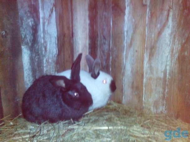Кролики, фотография 1
