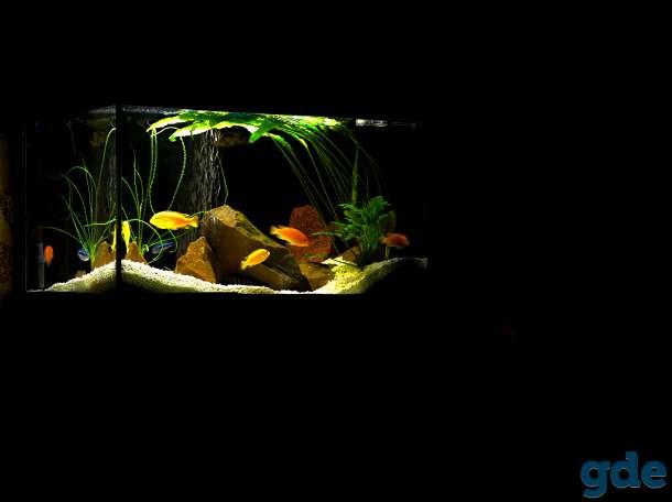 аквариум 200 литров, фотография 7