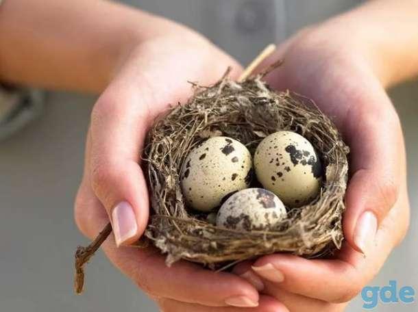 Яйцо перепелиное, фотография 1
