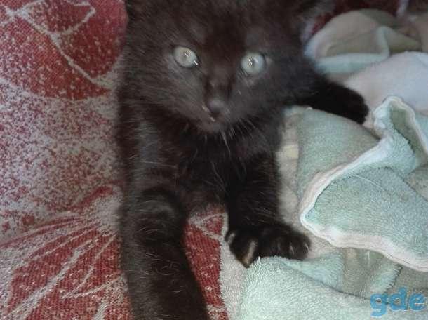 Черного котенка (мальчик), фотография 1