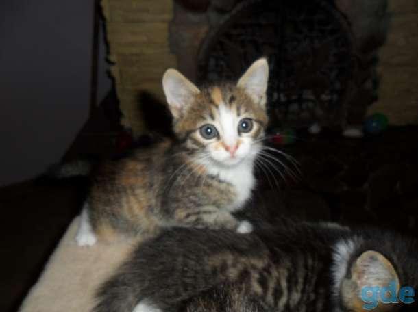 Котята в добрые руки, фотография 4