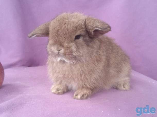 Питомник.карликовые кролики квартирного содержания, фотография 6