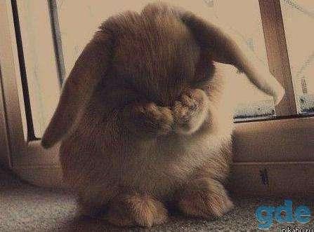 Питомник.карликовые кролики квартирного содержания, фотография 7