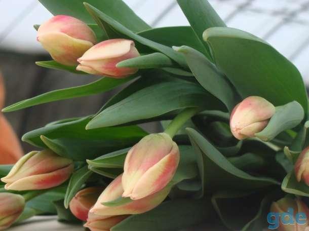 Цветы Примула к 14 февраля, фотография 10