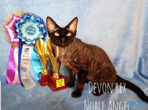 Девон рекс молодой кот, фотография 3