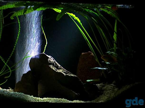 аквариум 200 литров, фотография 9