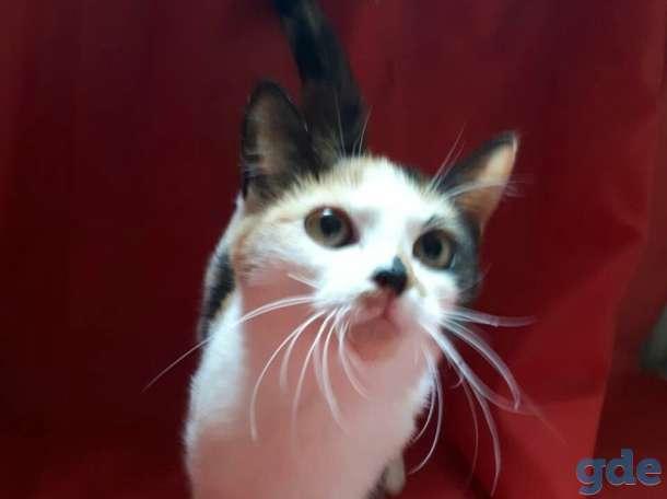 Кошечка Итали, фотография 3
