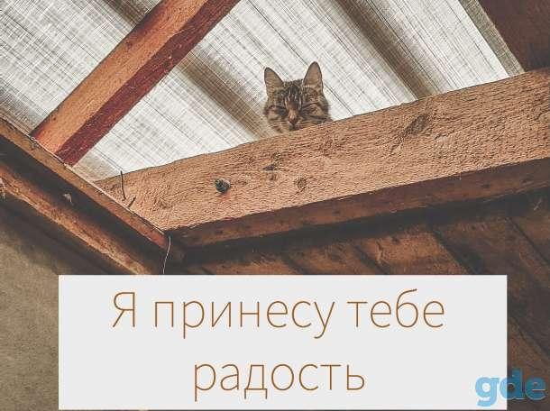 Нежные котята ждут хозяев, фотография 5