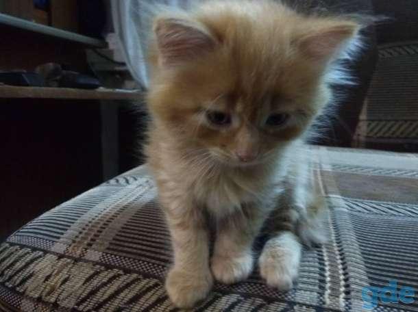 котята в хорошие руки, фотография 3