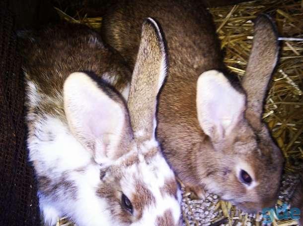 кролики( Бабочка), фотография 1