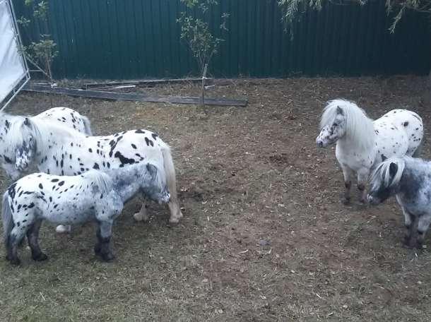Продам пони , фотография 1