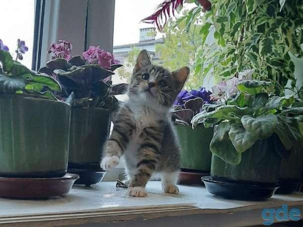 Самый красивый цветочек для вас). Очаровательная, нарядная девочка в тигровом комбинезончике, фотография 2