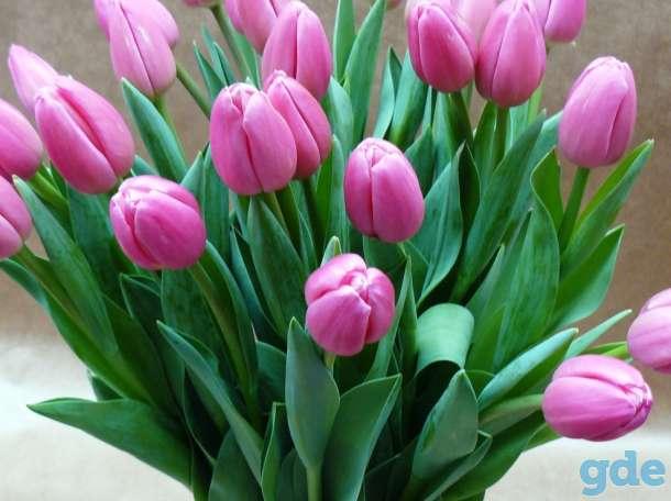 Тюльпаны к 8 марта, фотография 1