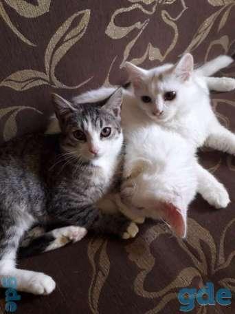 Котята,5  месяцев,2 мальчика и девочка в дар., фотография 2