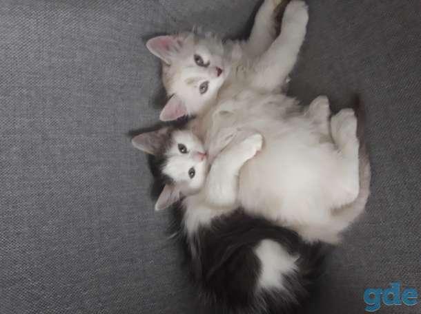 Отдам котят, фотография 1