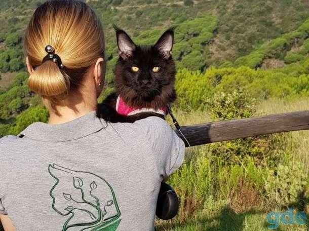 Котята Maine Coon - такие только у нас!, фотография 3