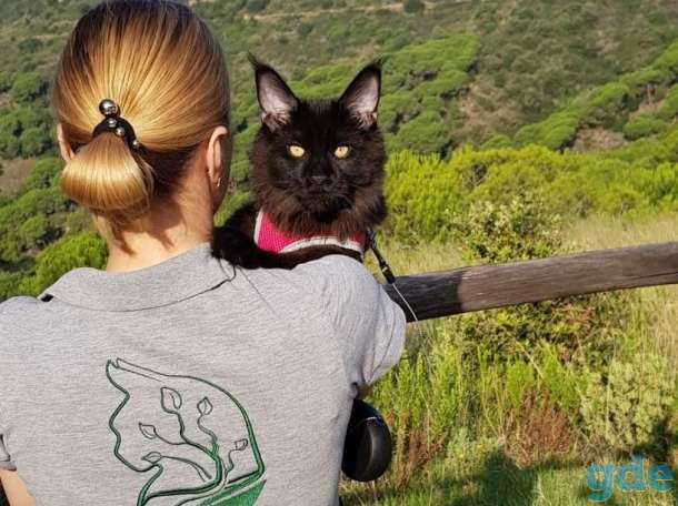 Котята Maine Coon - Эксклюзив!, фотография 3