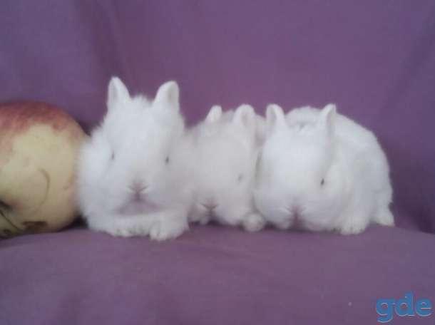 Питомник.карликовые кролики квартирного содержания, фотография 1