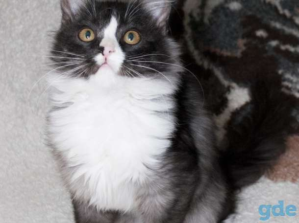 Кошечка Мята, фотография 8