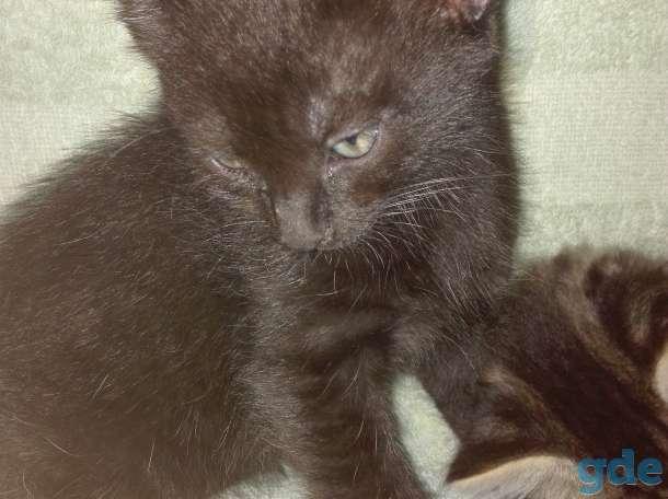 Котенок, фотография 2