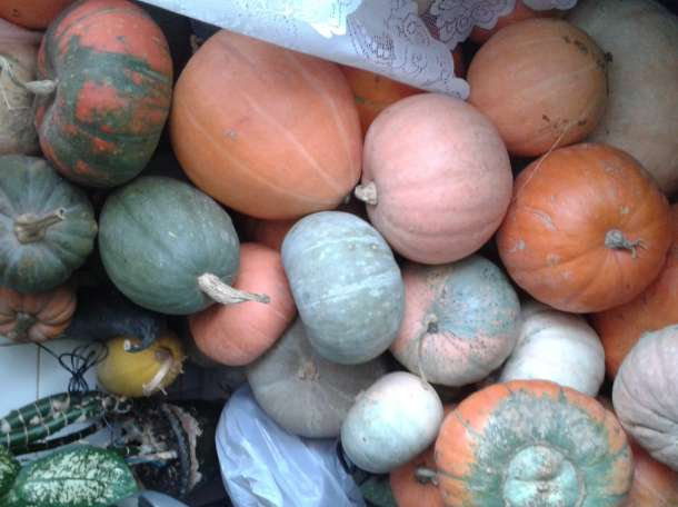 Домашние тыквы, фотография 1