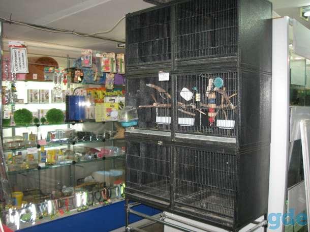 Ищу компаньонов или продам действующий зоомагазин, фотография 11